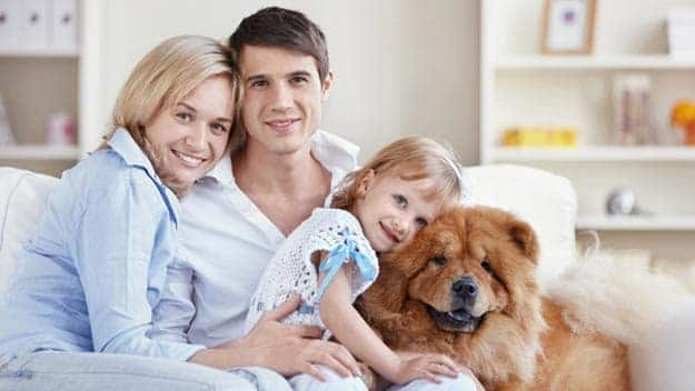 Wills & Trusts dog-young-family Direct Wills Stonebridge